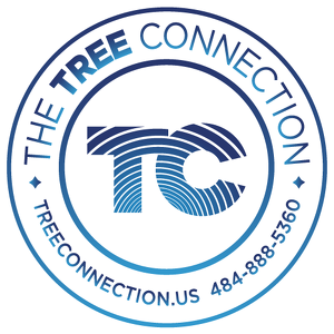 Team Page: The Tree Connection
